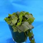 Dried precut wakame seaweed