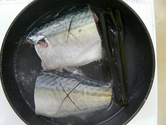 mackerel (17)