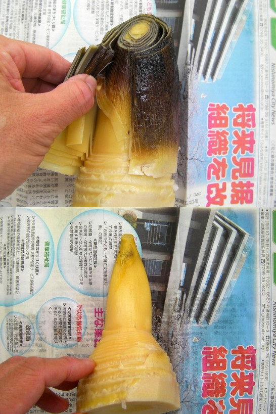 bamboo shoots (26)new3