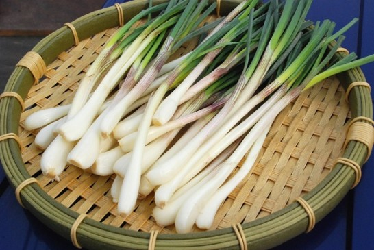 Japanese shallot picture3